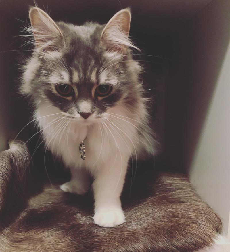 Tänä vuonna kissetkin sai joululahjan - oman poron nahan.